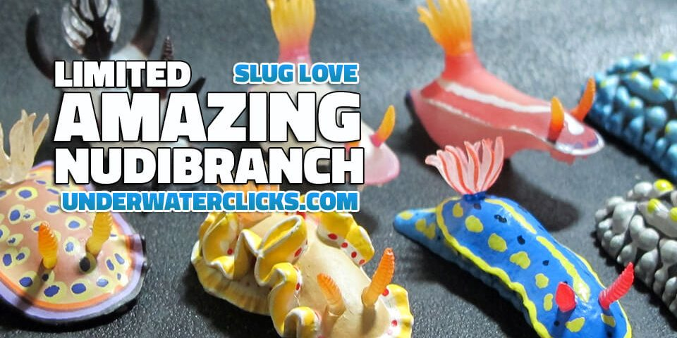 nudibranch keyrings feature