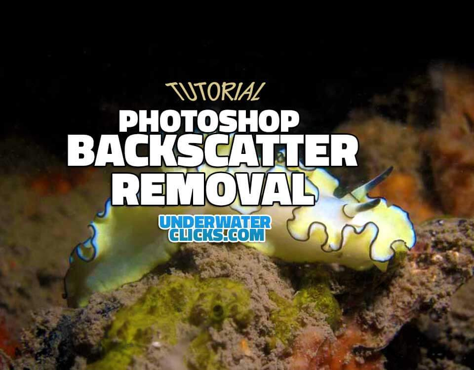 photoshop backscatter removal tutorial