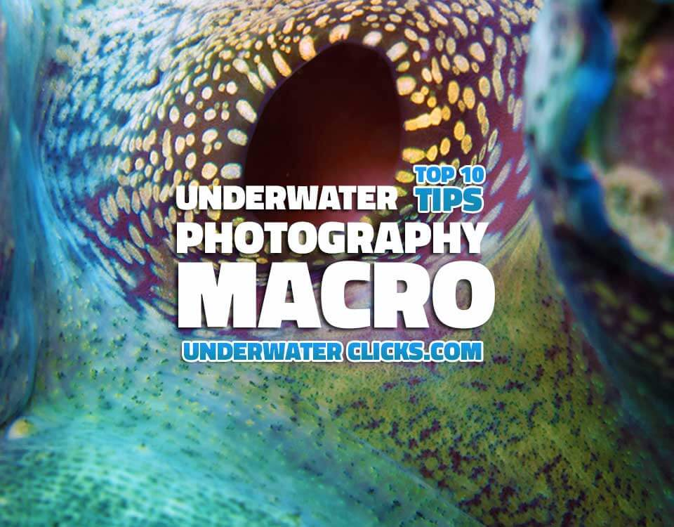 Top 10 Macro Tips Underwater Photography Macro