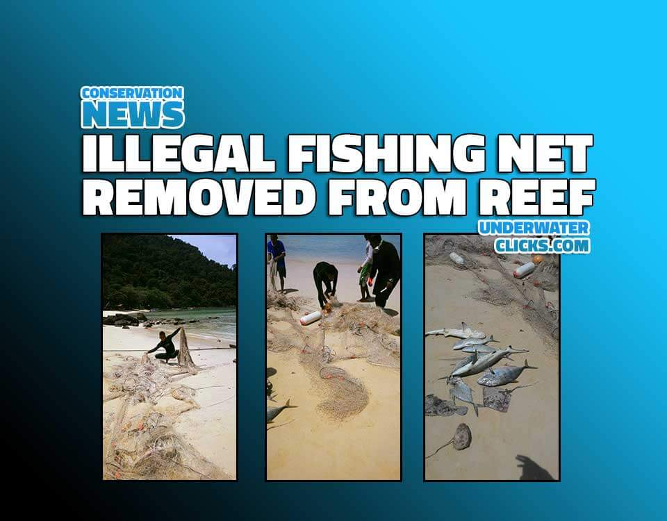 Scuba Diving News- Illegal fishing net removed from reef