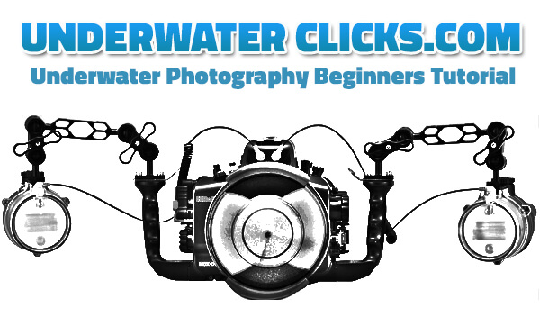 Underwater Photography Beginners Tutorial