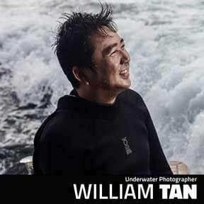 William Tan - Underwater Photographer