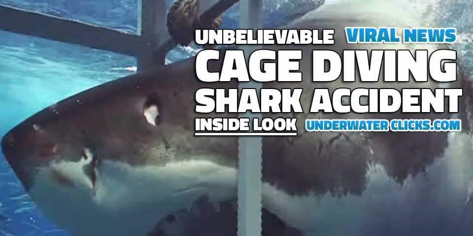 Cage Diving Shark Accident Shark Enters Cage Mexico