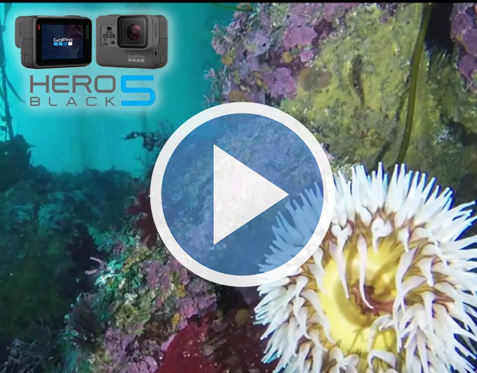 New Gopro Hero5 Video
