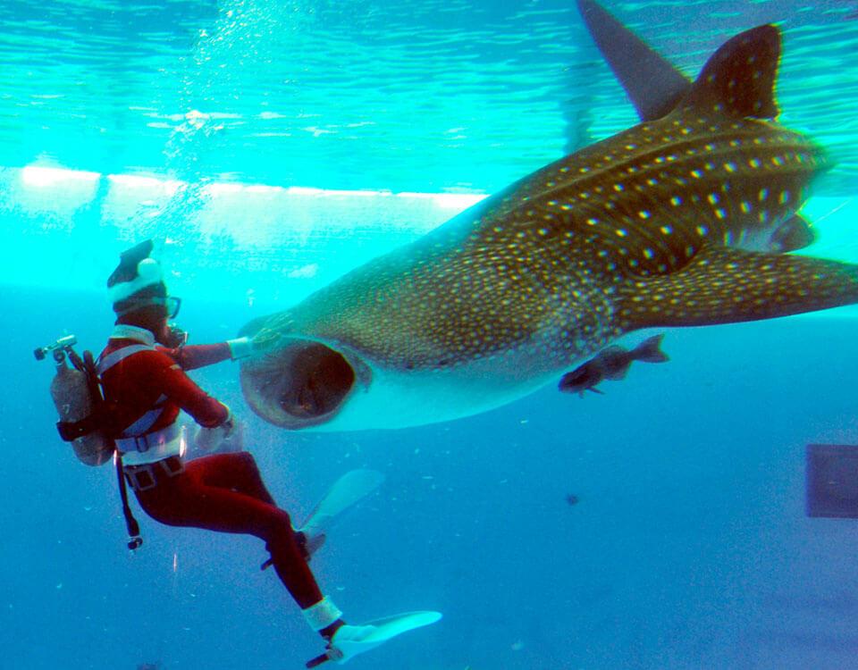 #1 Top 10 Christmas Divers