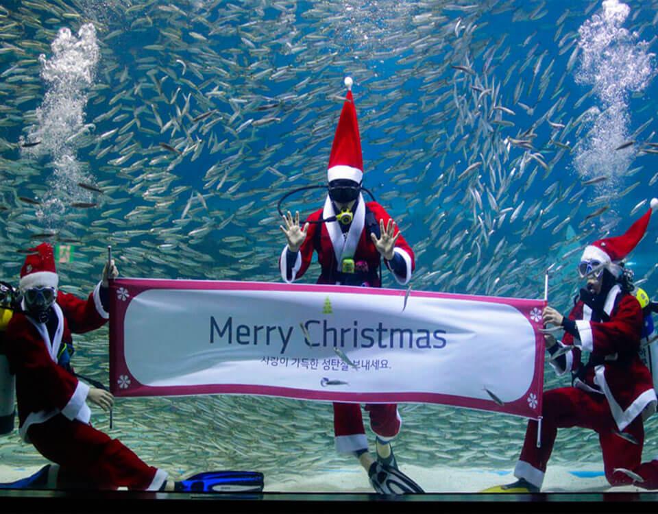 #2 Top 10 Christmas Divers