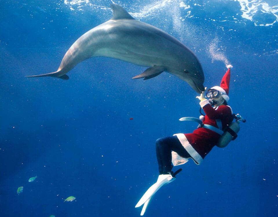 #3 Top 10 Christmas Divers